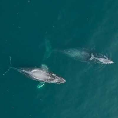 Mexiko: Whales of Guerrero Research Project